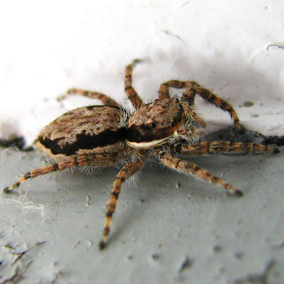 Spider Pest Control Experts Specialized Pest Patrol gets rid of spiders like the one pictured above