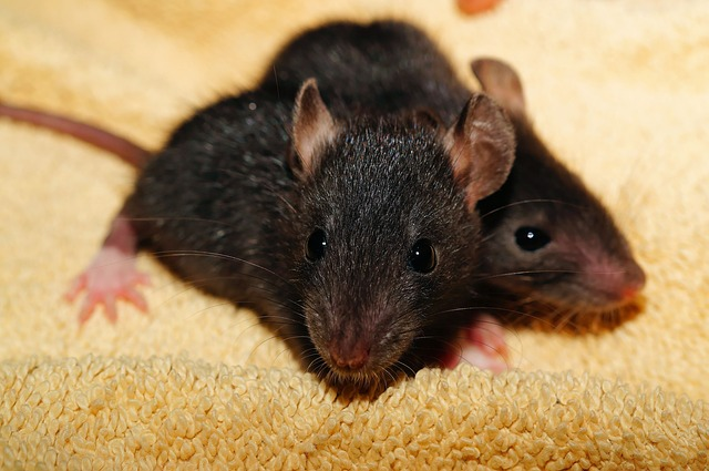 Specialized Pest Patrol are rodent control experts serving Roseville