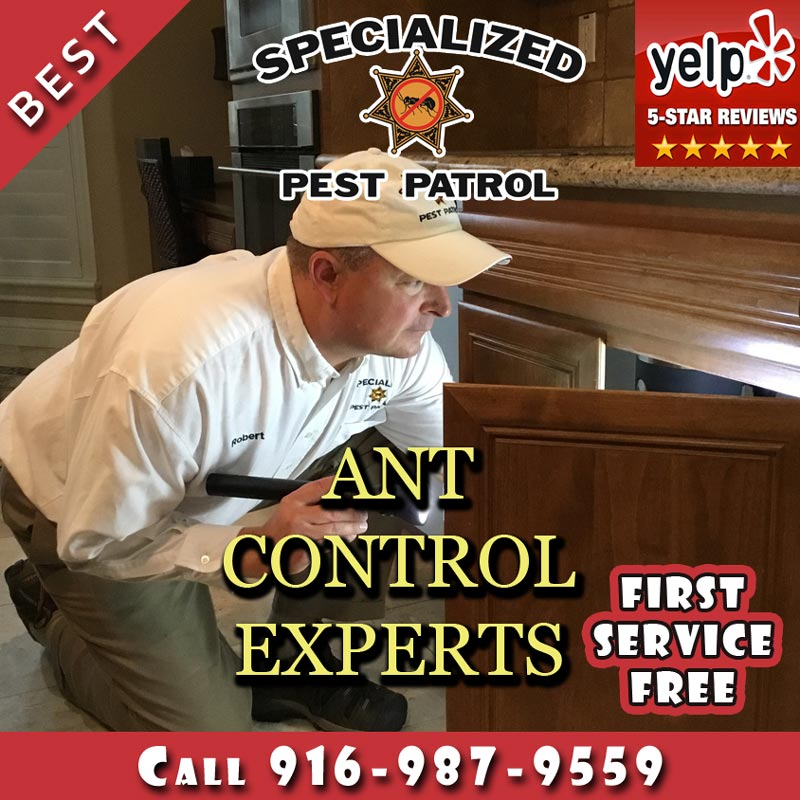 Ant Control by Specialized Pest Patrol