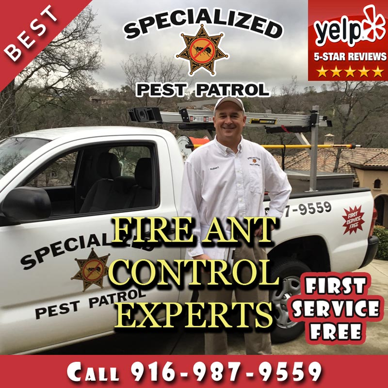 Fire Ant Control by Specialized Pest Patrol