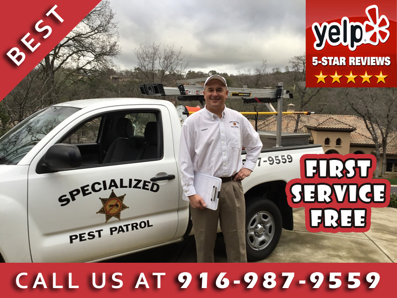 Placer County Pest Control Company Specialized Pest Patrol