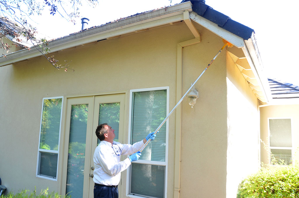 Specialized Pest Patrol are spider pest control experts serving Roseville