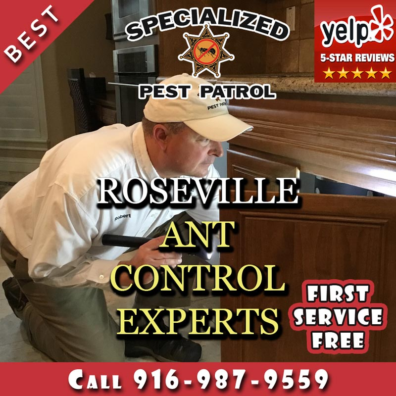 Roseville Ant Control Company Specialized Pest Patrol