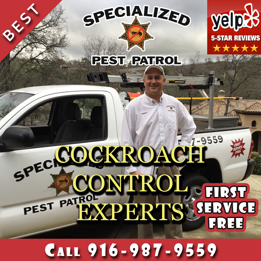 Cockroach Control by Specialized Pest Patrol