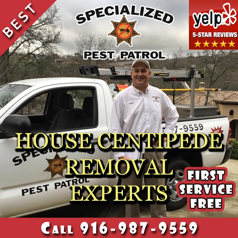 House Centipede Removal by Specialized Pest Patrol