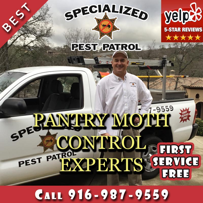 Pantry Moth Control by Specialized Pest Patrol
