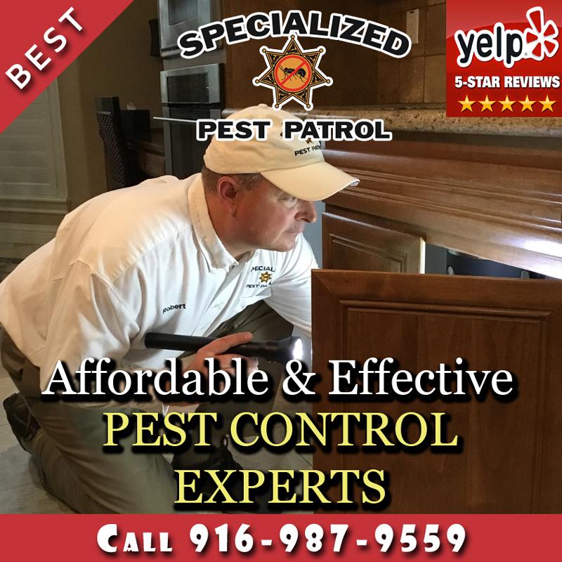 Pest Control Sacramento CA Company Specialized Pest Patrol