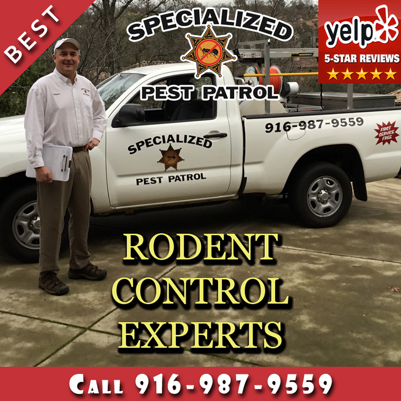 Rodent Control by Specialized Pest Patrol