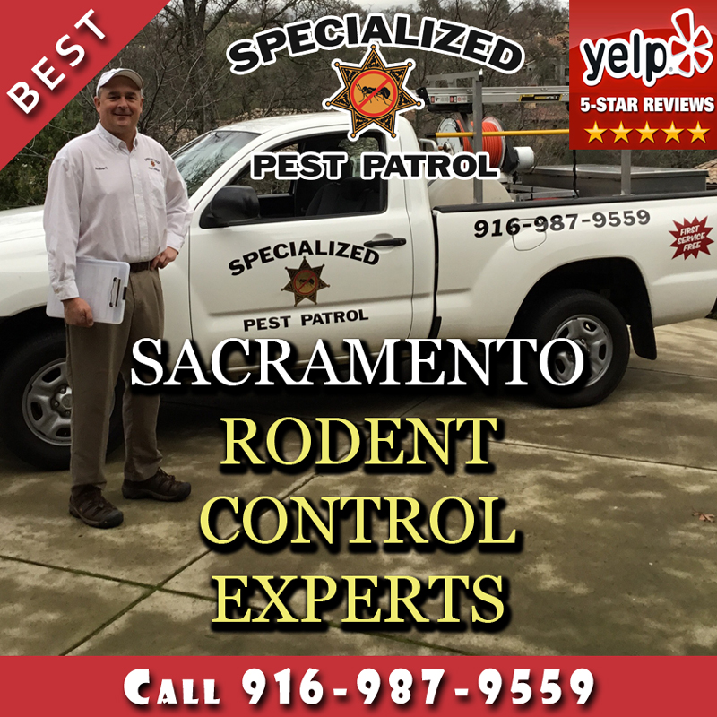 Rodent Control Services by Pest Control Sacramento Company Specialized Pest Patrol