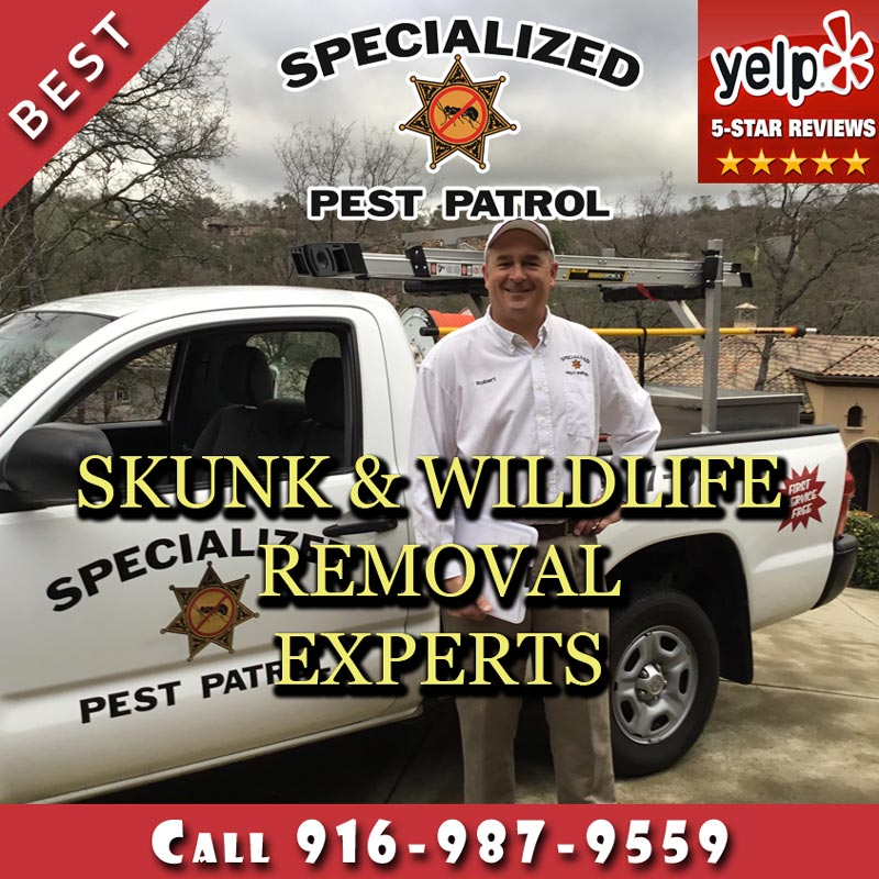 Sacramento Wildlife and Skunk Removal Company Specialized Pest Patrol