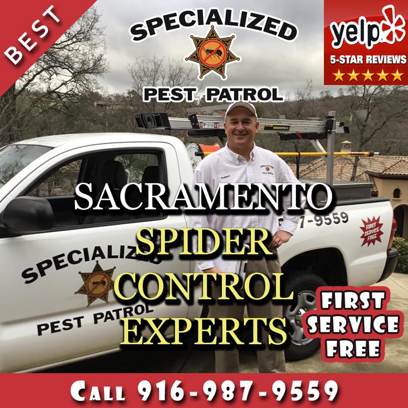 Spider Pest Control Sacramento by Pest Control Sacramento Company Specialized Pest Patrol