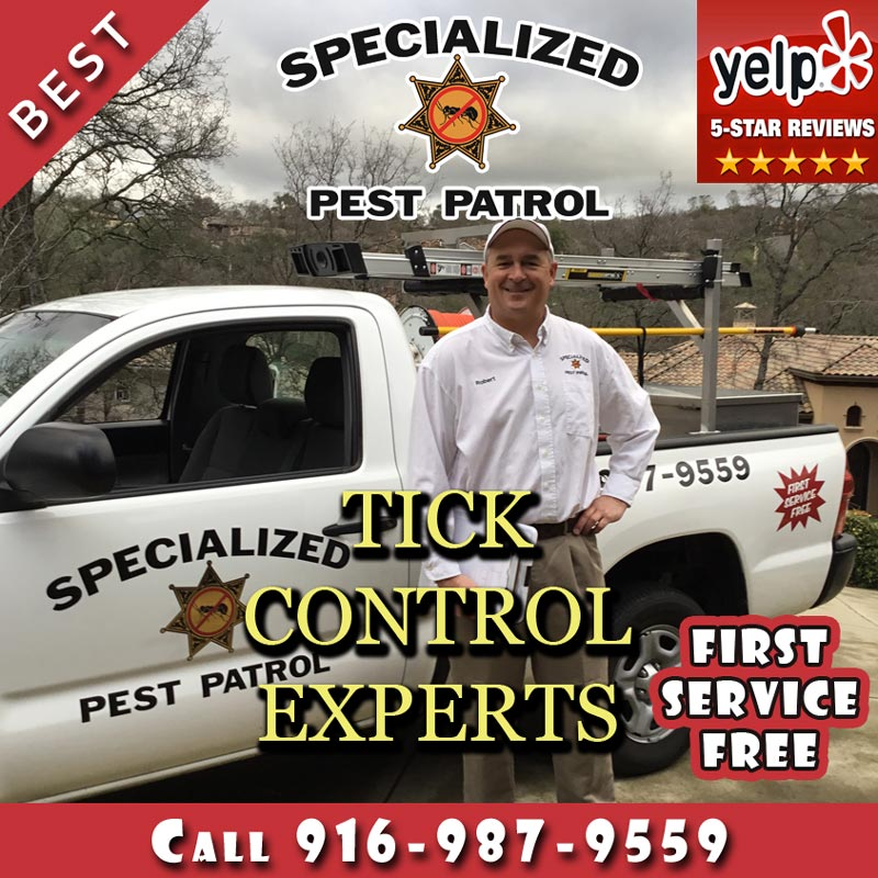 Tick Control by Specialized Pest Patrol