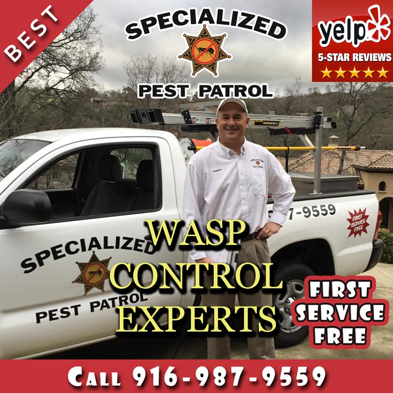 Wasp Control and Wasp Removal by Specialized Pest Patrol
