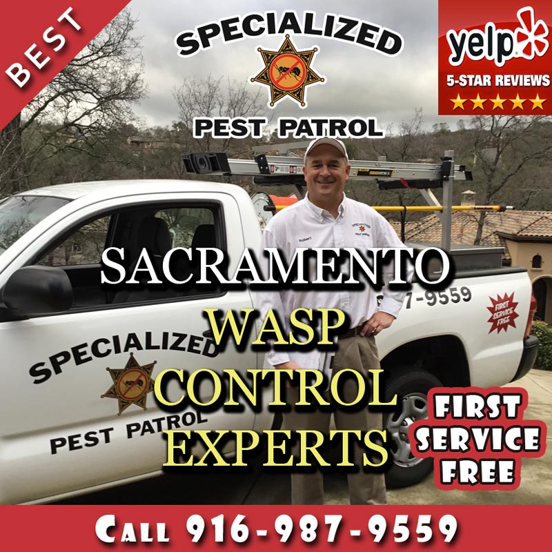 Sacramento Wasp Removal and Wasp Control Company Specialized Pest Patrol