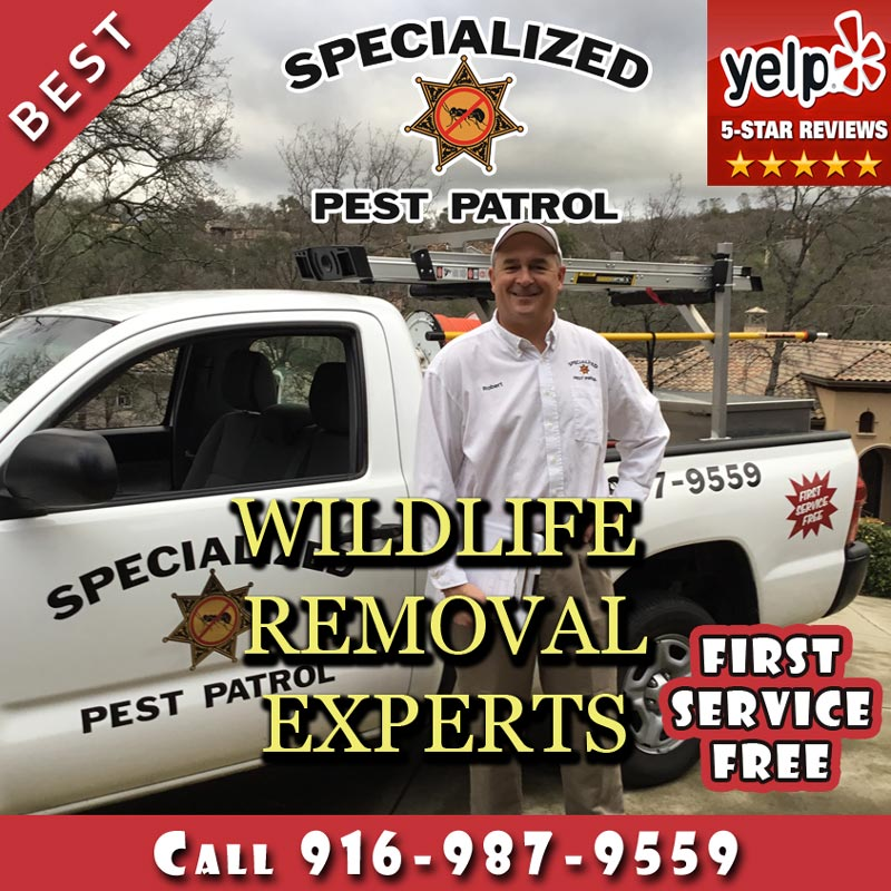 Wildlife Removal by Specialized Pest Patrol